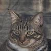 2019-01-13_neighbor's cat_P1130063-2