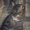 2019-01-13_neighbor's cat_P1130049