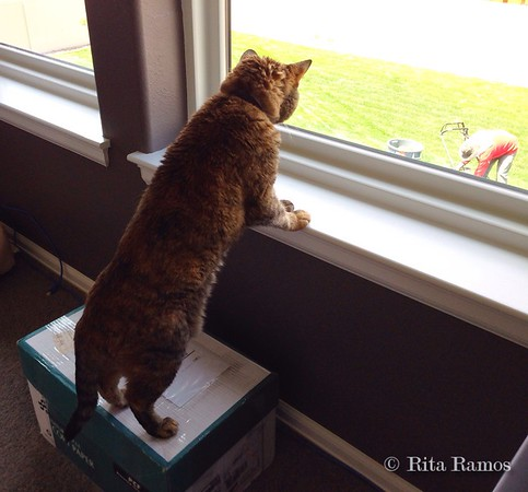 Supervising the Yard Work -- 05/15/14