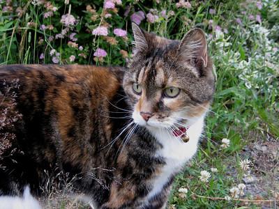 Kitties 2010!
