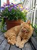 Oliver sunbathing on the deck