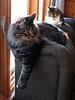 Darcy & Nina