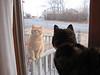 "Oliver:  ""Hey...uh....yeah.....ya wanna let me in..?""<br /> Nina:.........................."