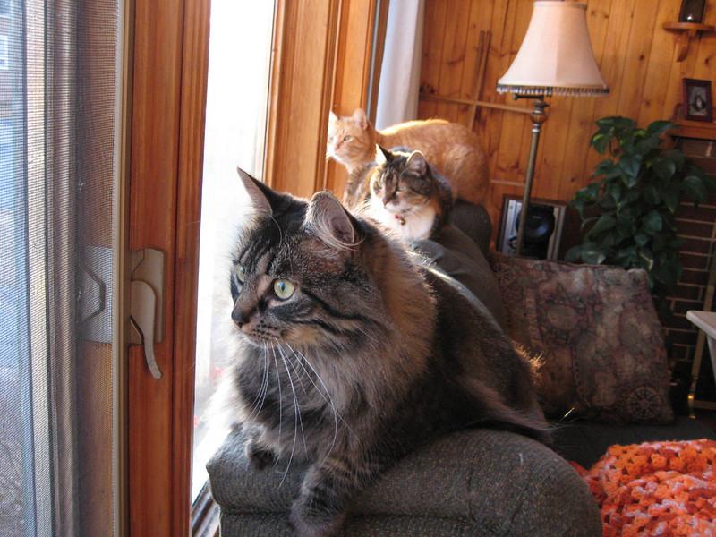Darcy, Nina & Oliver