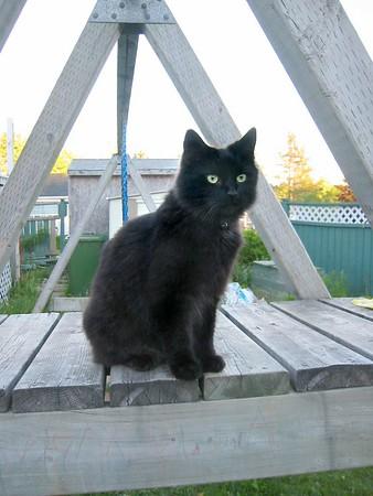 Kitties Summer 2005