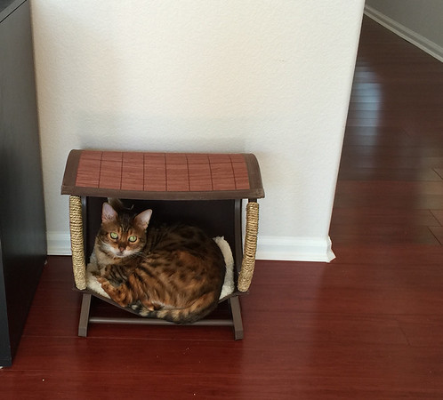 Happy National Cat Day! -- 10/29/14