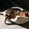 Solar-Powered Cat Has Run Out of Juice -- 11/05/14