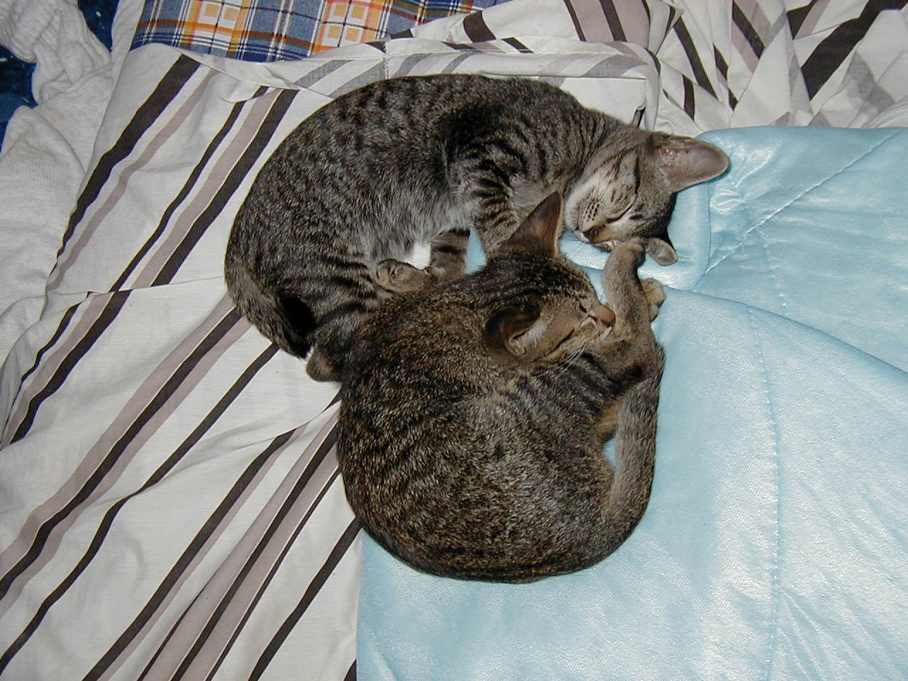 Mr. Naughty (Coffee, above) with his brother, Ovaltine. July 3, 2002