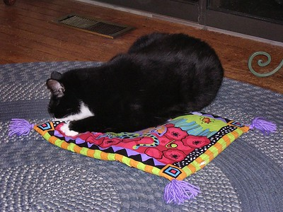 The Cat on the (Catnip) Mat