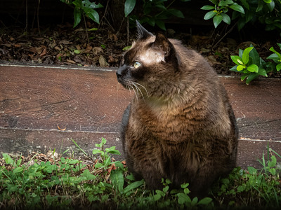 Feline Reflection