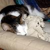 Mr. Staples taking a cat-nap…