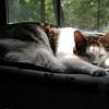 Mr. Staples resting in his hammock…