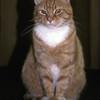 Presenting Stedman - A Cat of Great Renown (also, Rosie's eldest boy…)
