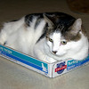 Mr. Staples sits in his Turkey Cat Toboggan…