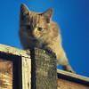 """Claude, Terror of the Neighbourhood…  (one of """"Rosie's Boys"""")"""