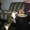 Rosie helps Malcolm with his fish & chips…
