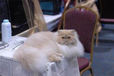 CatShow0041