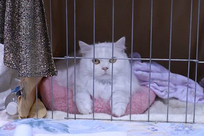 CatShow0026