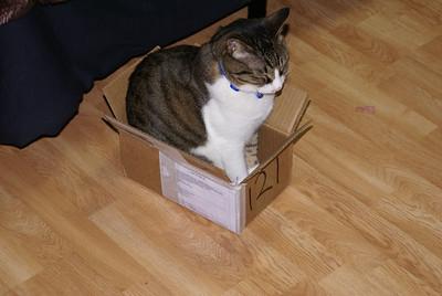 Box Sitting