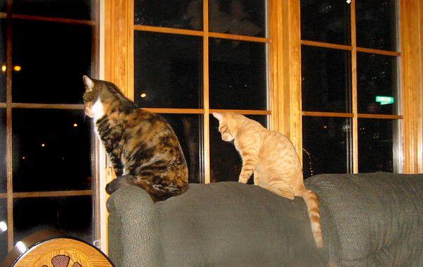 Our Kitties December 2003