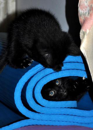 Sampson & Delilah (Bitsy's Kittens)