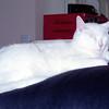 Sylvia 2001