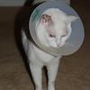 Sylvia after surgery October 2006