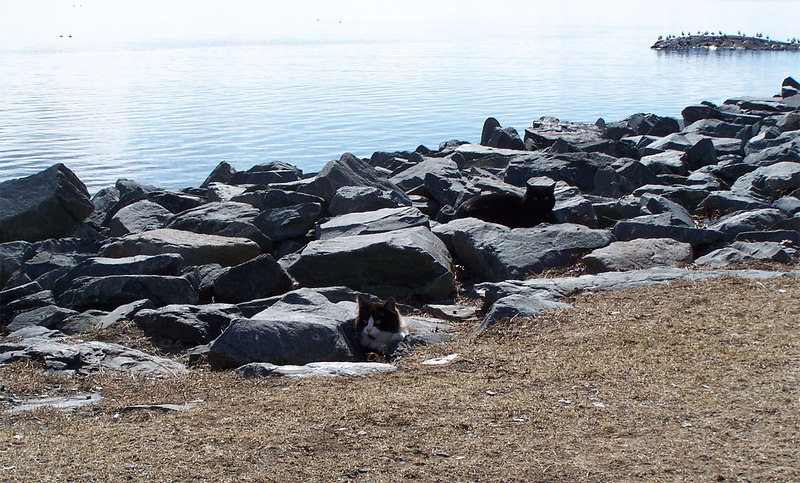 "The ""Breakwater Cats"".  There are four feral cats who live by the water in Point Pleasant Park.  They are fed daily by volunteers, but otherwise on their own.  You can't get very close to them, but they seem quite content."