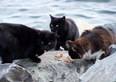 The Breakwater Cats