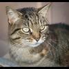 Cat BCSPCA