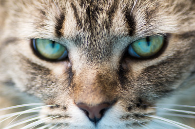 Eyes of a Hunter