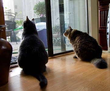 birdwatching-CRW_4238