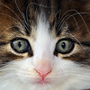 Close-up of a Tabby Kitten's Face