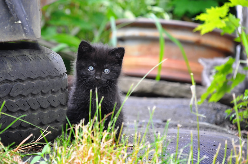 Black Stray Kitten