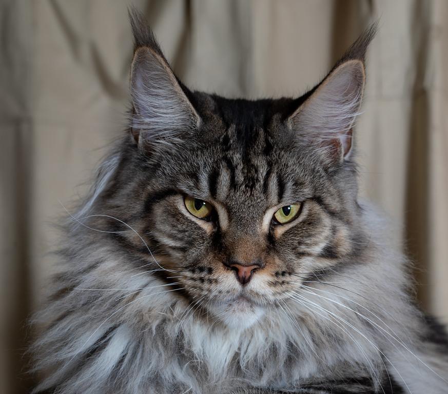 IMAGE: https://photos.smugmug.com/Cats/i-Rp2hX93/0/8570c812/XL/294A5750-XL.jpg