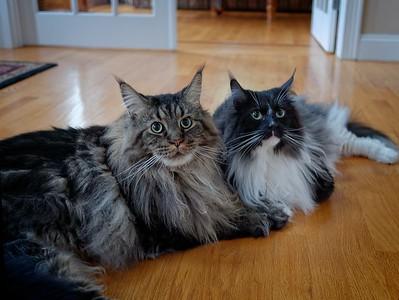 Theodore & Winston