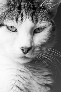 Windowlit Portrait of a Cat