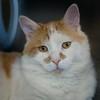 Cat at BCSPCA