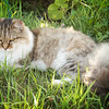 Lou Lou Belle on grass