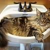 My Sink!