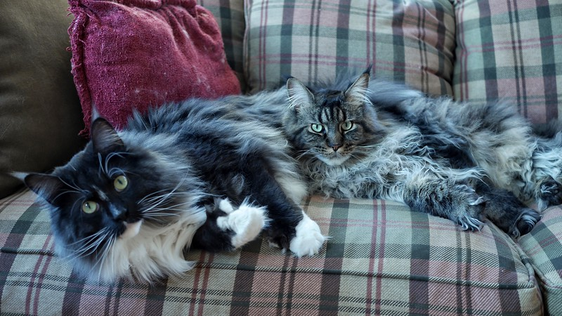 Winston & Theodore