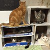 Cats condominium