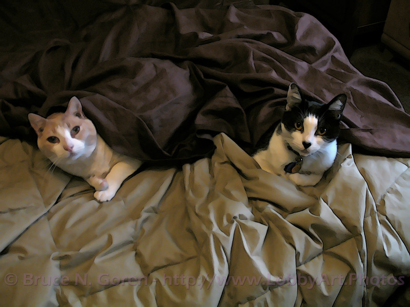 Undercover Cats . . . Tooned