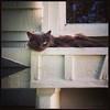 Cat in Flowerbox