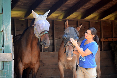 Tania Barricklo-Daily Freeman                      Catskill Animal Sanctuary Animal Care Director Kelly Mullins explains how Pliers, left, the 33 year-old son of Ashley , right, who is 35, would not allow anyone near his mother when they first arrived.