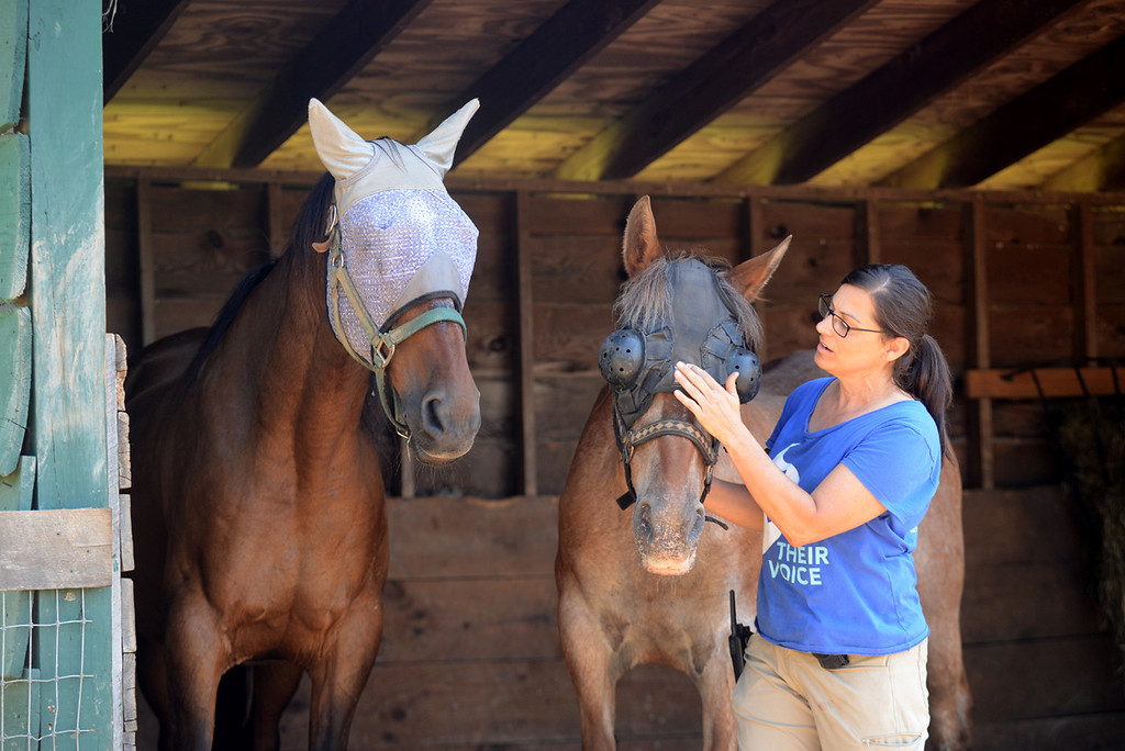 . Tania Barricklo-Daily Freeman                      Catskill Animal Sanctuary Animal Care Director Kelly Mullins explains how Pliers, left, the 33 year-old son of Ashley , right, who is 35, would not allow anyone near his mother when they first arrived.