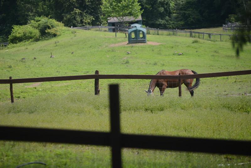 Catskill Animal Sanctuary - JRC-DailyFreeman