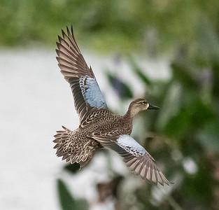 Cattail Marsh  10-3-17