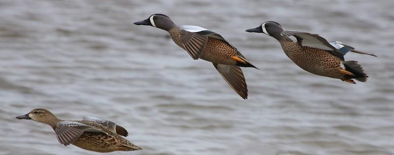 Blue wings scrubbing off speed as they near a landing spot.