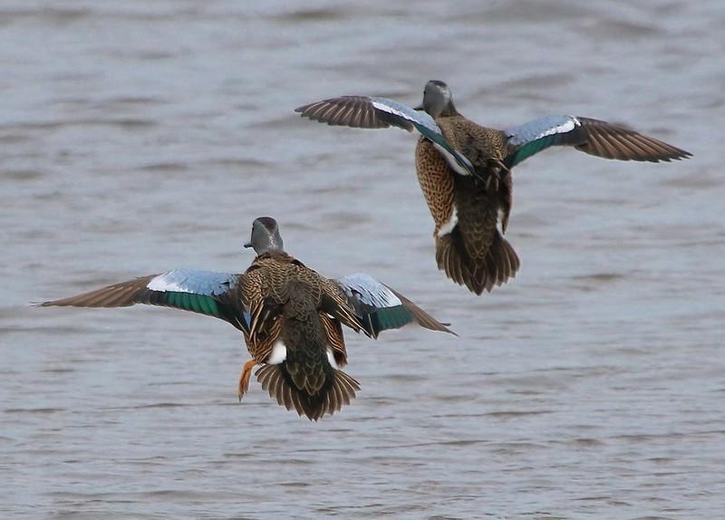 Flaring to land.